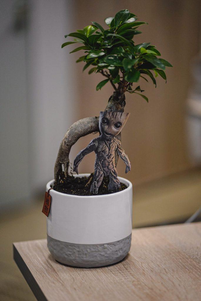 Die Zimmerpflanze unseres Wirtschaftsinformatikers Max.